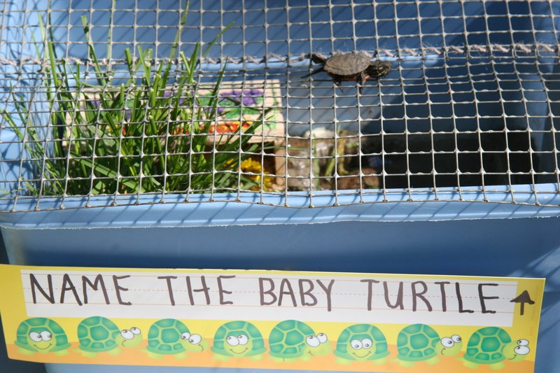 name_the_baby_turtle_at_moon_point