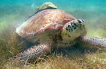 Fascinating Turtles Inspire Humans to Help