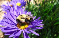 Native Gardens Can Attract All Sorts of Critters