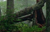 Love Thy Forests; Hug a Tree