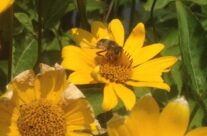 Protect the Pollinators